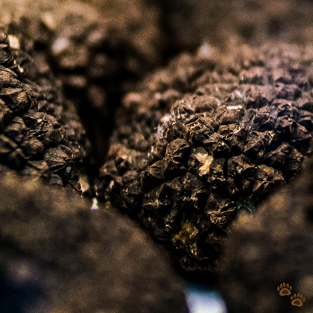 100% Crop of the Black Truffle Image